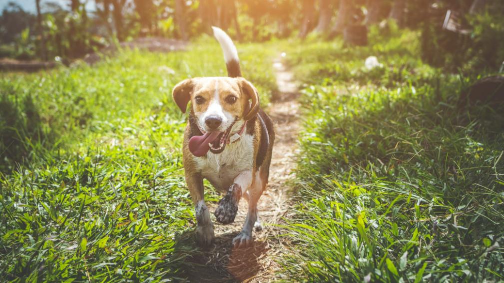 PurinarmesHundefutter– Damit Ihr Hund wieder gesund wird und gesund bleibt